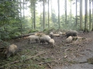 Flugplatz nach Wildschweinschaden
