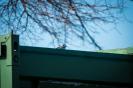 Frühjahr2021_16